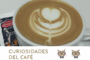 Los dos gatos más longevos del mundo bebían café todos los días